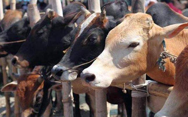 Alwar: Man killed by alleged vigilantes had history of cow smuggling
