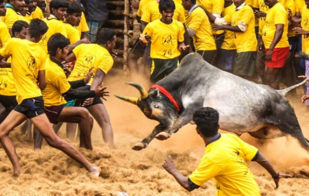 Teen dies while watching bull-taming sport in Madurai