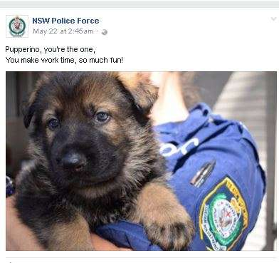 India Tv - NSW Police dogs