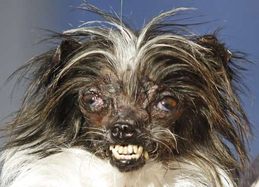 Mastiff named Martha crowned world's ugliest dog
