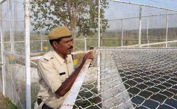 Four security guards are assigned to protect the Banyan tree