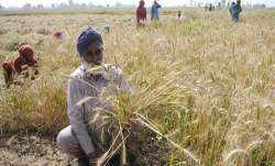 The Punjab government on Wednesday hiked the compensation