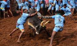 Participants try to tame a bull during Jallikattu event at