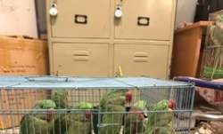 Parrots have a day out in Patiala House Court