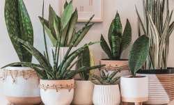 Vastu Tips: Keep this type of pots in the south-west direction to stay healthy always