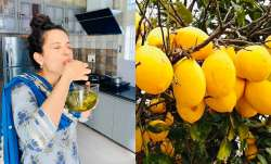 Kangana Ranaut relives her childhood memory with citron murabba: Know 5 health benefits of the fruit