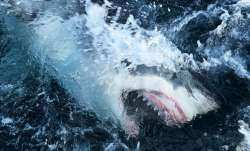 sharks slaughtered, slaughtering sharks, covid 19 vaccine, sharks, sharks vaccine, adjuvants, Squale