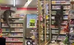 6-feet giant lizard goes grocery shopping, terrified customers dub it as Godzilla; WATCH