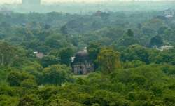 A view of trees in the vicinity of the Humayun's Tomb in