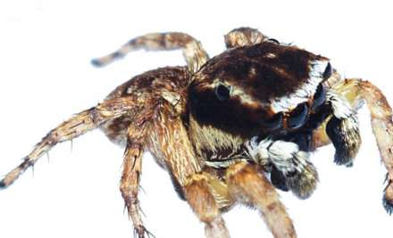 new spider species mumbai aarey milk colony