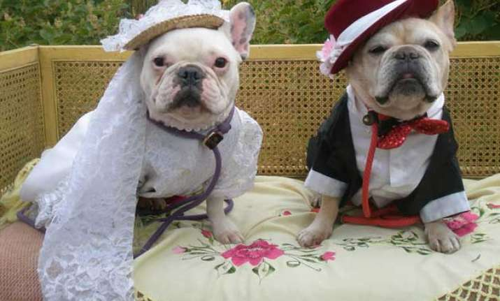 Dog marriage