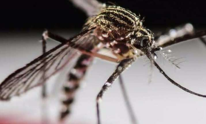 Two more Indians infected with Zika in Singapore- India TV