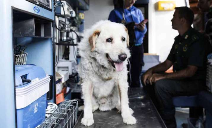 Dog who spent 9 days under rubble rescued miraculously