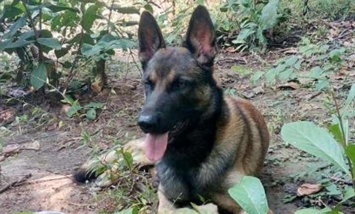 CRPF sniffer dog 'Cracker' dies in Maoist triggered IED