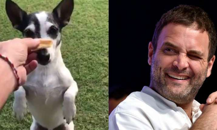 Rahul Gandhi posted a video of his pet on Twitter