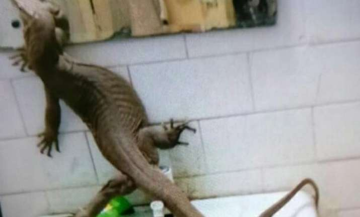 OMG! Mega lizard found inside girls' hostel in Delhi