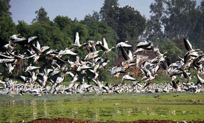 Jammu: Migratory birds throng Gharana wetland (File photo)
