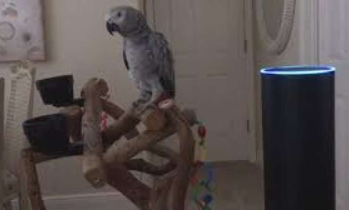Naughty pet parrot uses Alexa to place multiple orders on
