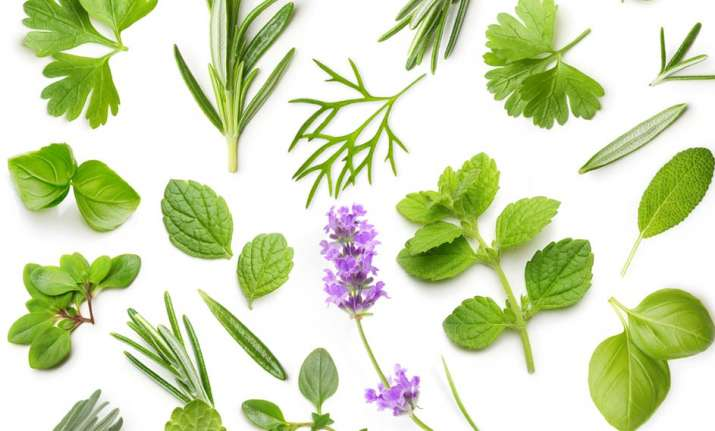 Include these 5 miracle herbs in your daily diet for