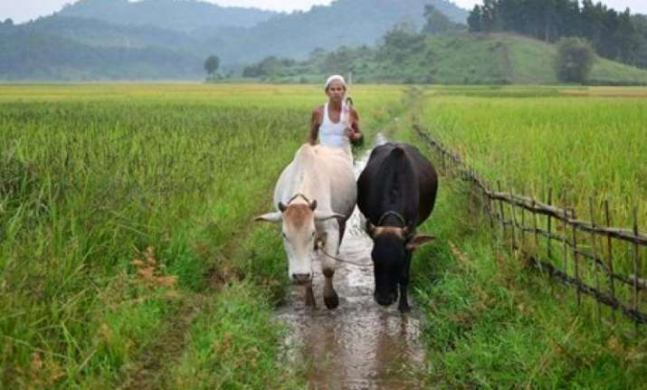 Uttarakhand: Farmers to get bonus on per quintal of wheat
