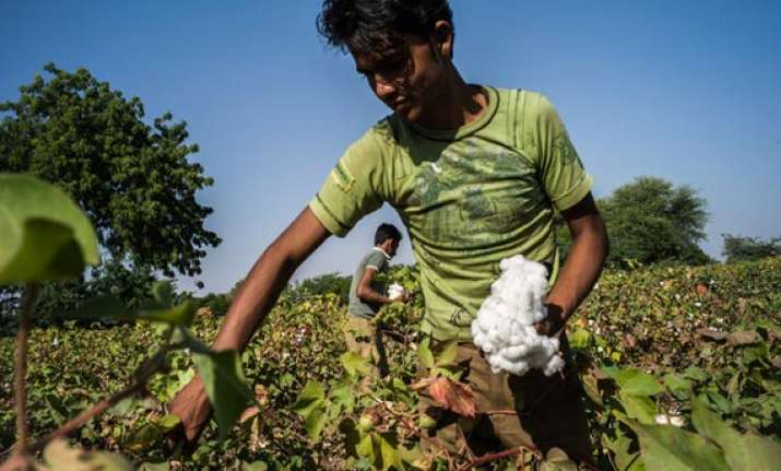 cotton crop estimated at 381 lakh bales for 2013 14