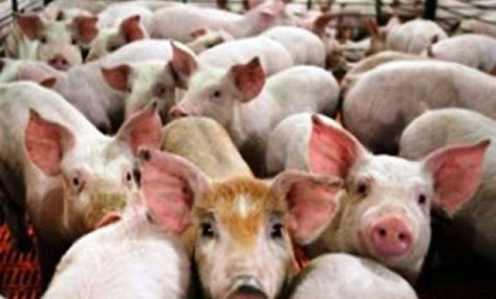 eu files case against russia over pig import issue
