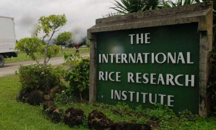 focus on aromatic rice will boost india s exports