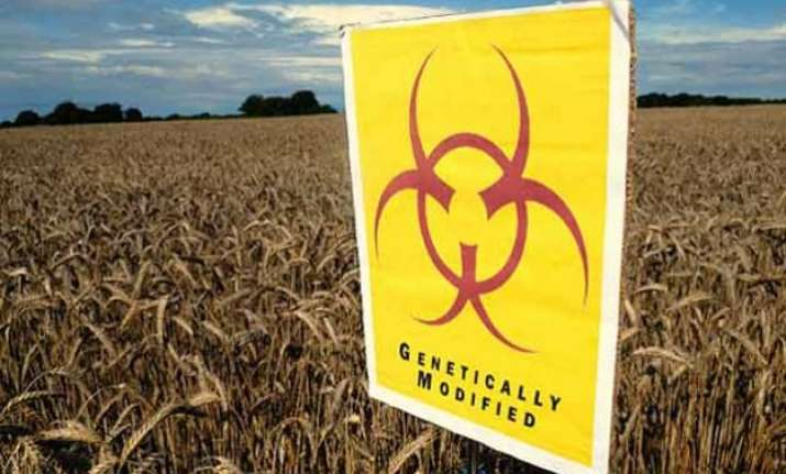 gm crops boom in india despite resistance