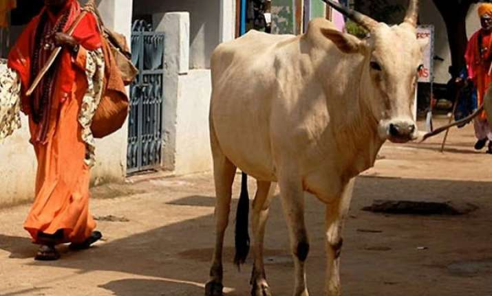 before cattle slaughter laws this country needs something