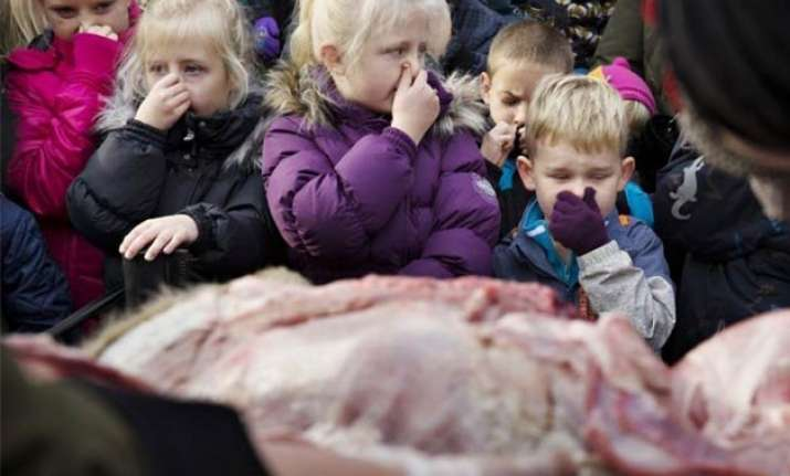 danish zoo slammed for dissecting lion in front of kids