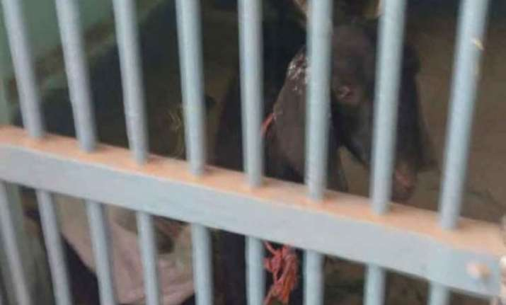 after issuing summons to parrot police puts goat in jail