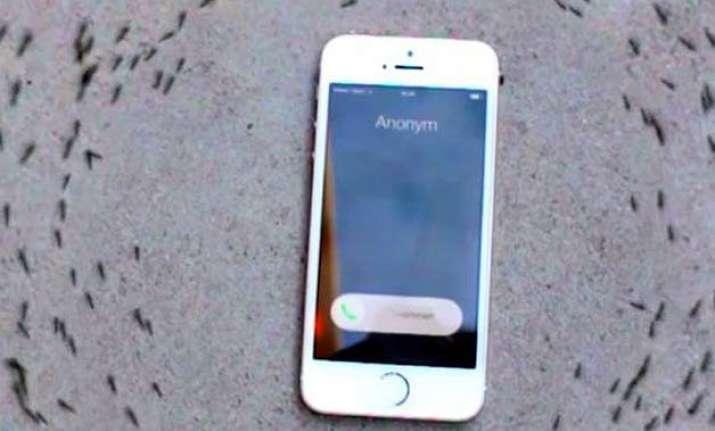 iphone ringtone makes ants run in a circle netizens debate