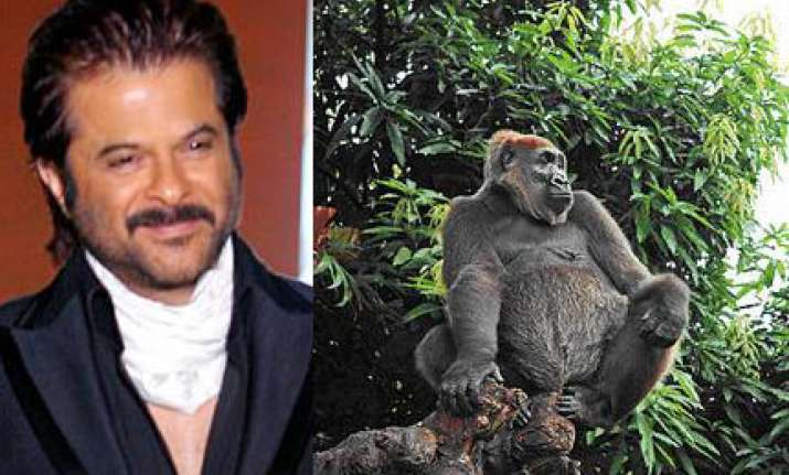 anil kapoor brings a gorilla from s. africa for no problem
