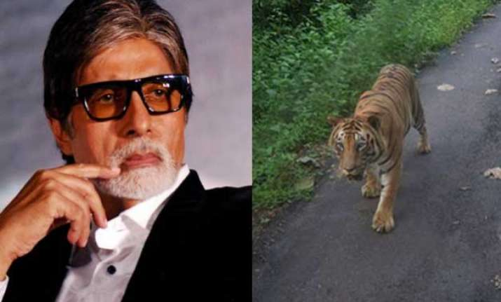 omg amitabh bachchan chased by a tiger for 4 km on mumbai