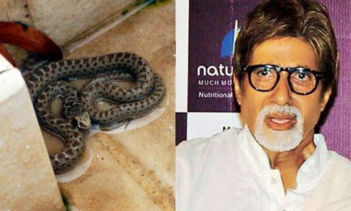 snake found inside amitabh bachchan s home in mumbai