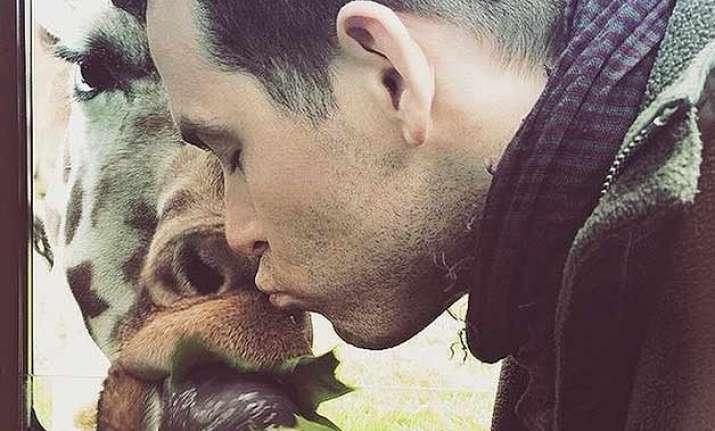 ryan reynolds kisses a giraffe