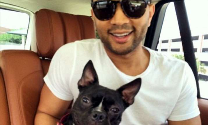 john legend and wife chrissy brought home an abused dog