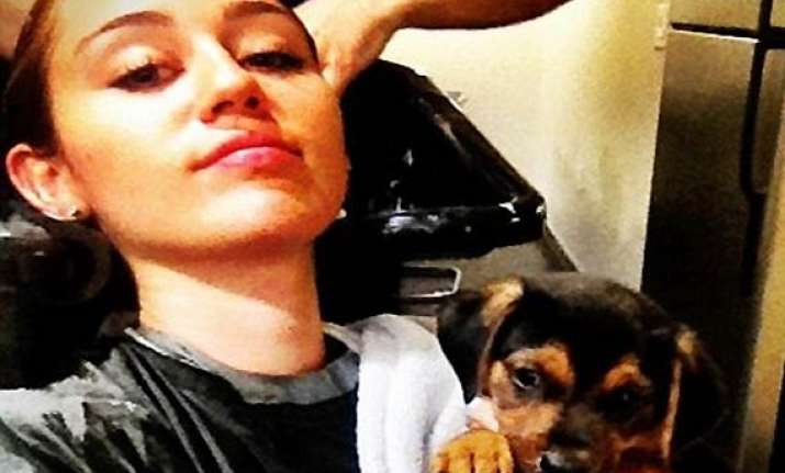miley cyrus gets a new puppy