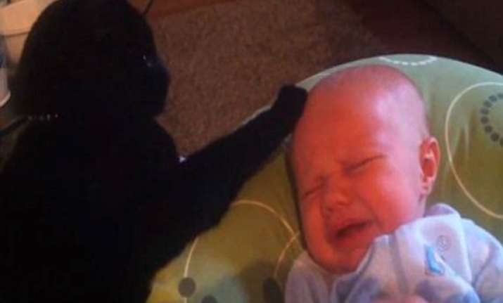 canadian cat puts crying baby to sleep in youtube video
