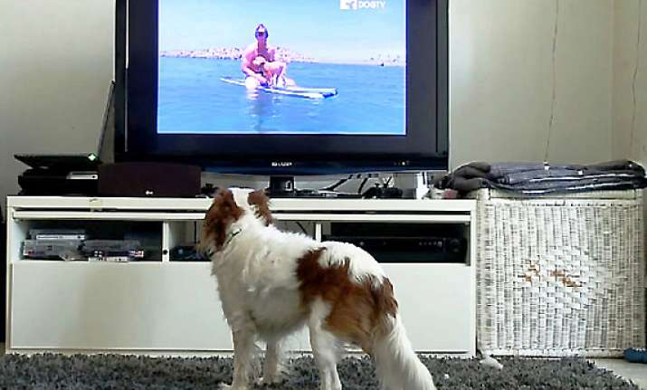 dogtv first 24 hour cable tv network for dogs