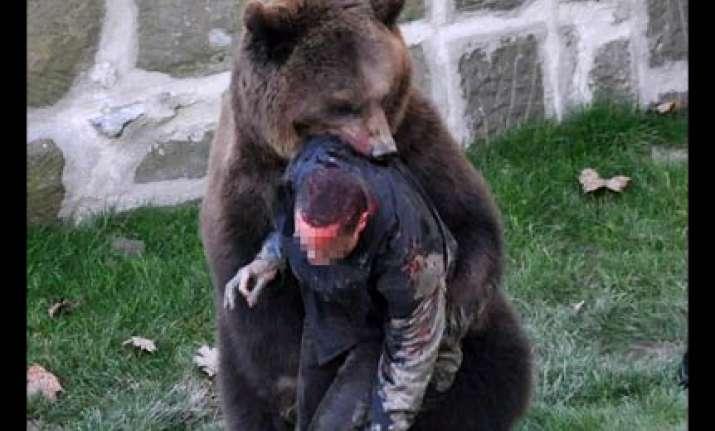 bear mauls swiss man as he climbs into zoo enclosure