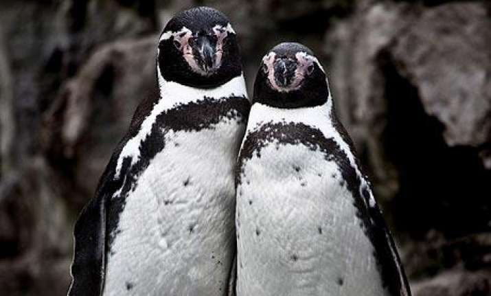 penguin couple in uk pose for photograph
