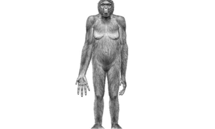 humans chimps evolved from one common ancestor