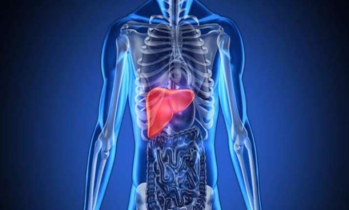 antioxidant that backs up liver during crisis identified