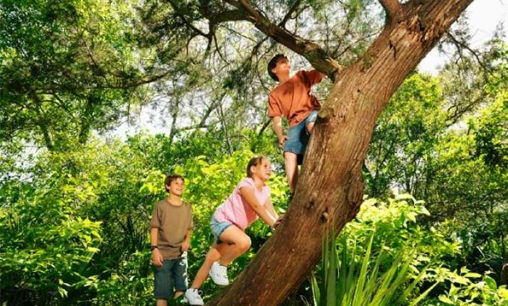 after yoga climb a tree to boost your memory