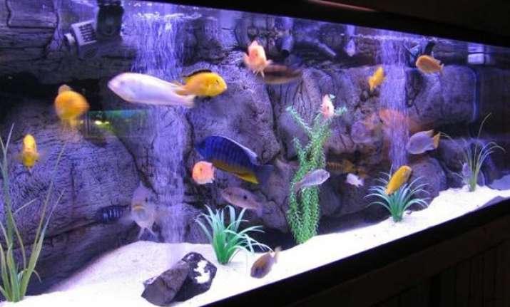 aquariums can lower bp improve mood