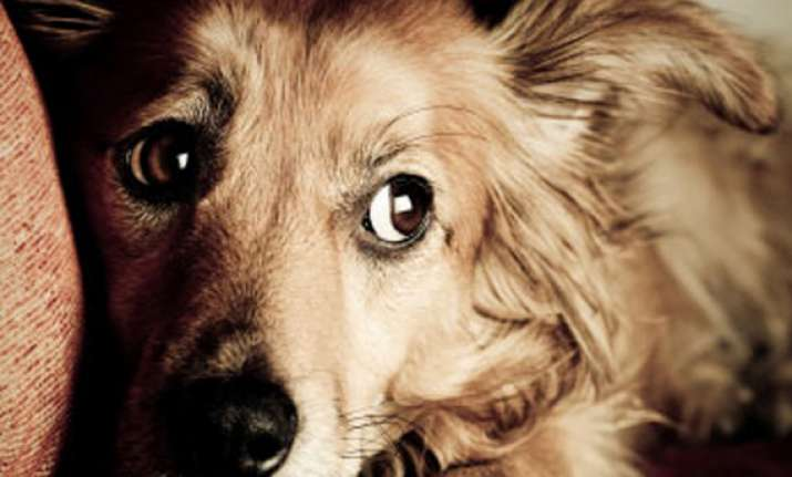 love your pets keep them safe this diwali see pics
