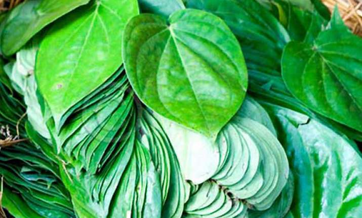 chewing betel leaf may help fight cancer