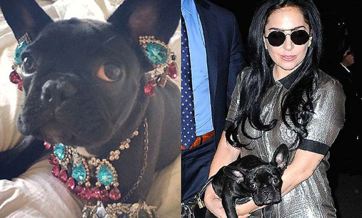 lady gaga dresses up pet in jewellery slammed by peta
