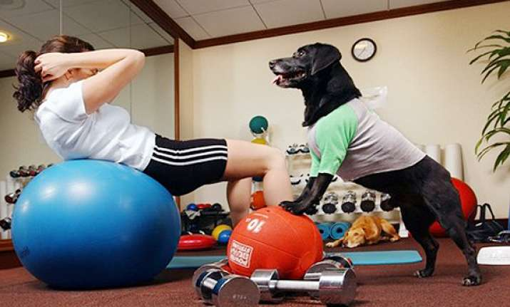 need a partner for workout try dogs see pics